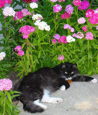 My garden guardian!