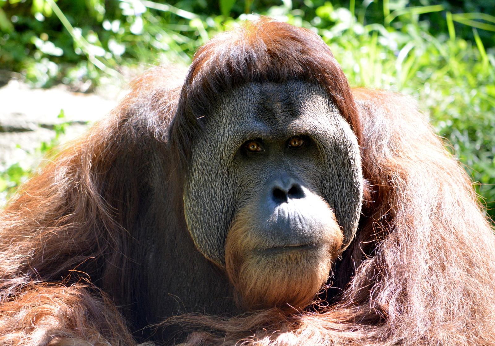 cozy birdhouse | orangutan