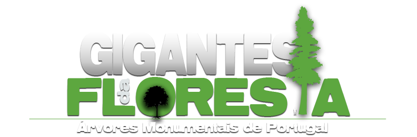 Gigantes da Floresta
