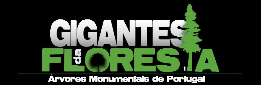 Gigantes da Floresta