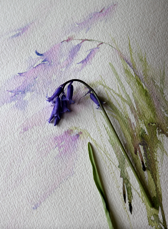 Watercolours With Life Are Bluebells Blue