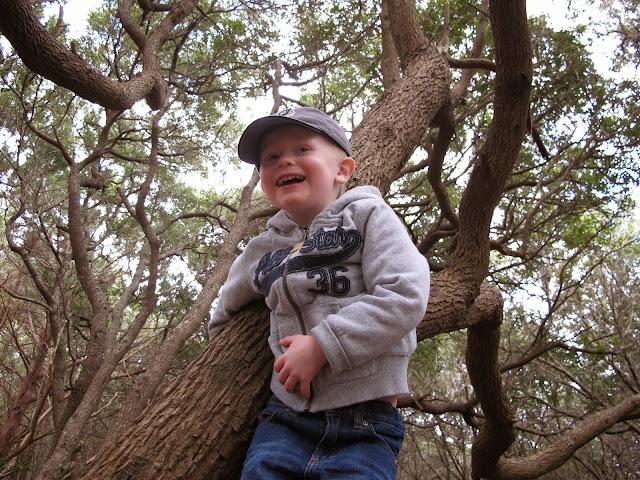 Porter in a Tree