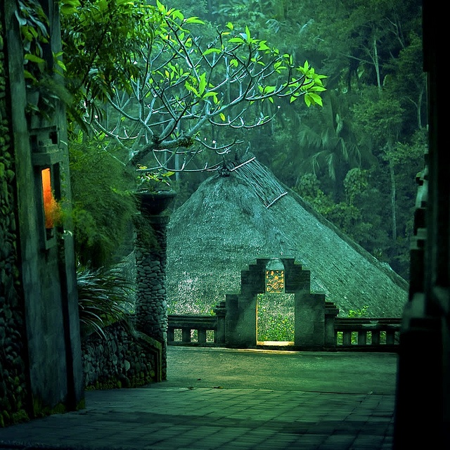 Bali Indonesia rainforest