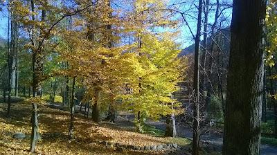 alejka w parku dolnym Szczawnica
