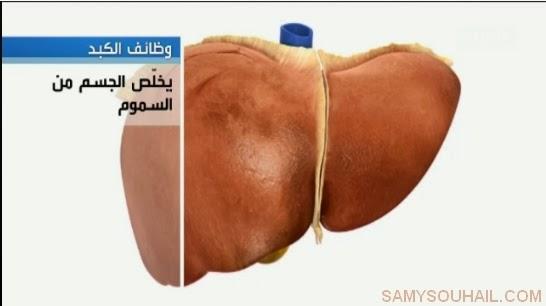 اكتشف أسباب الاصابة بأمراض الكبد + حلول للوقاية منها