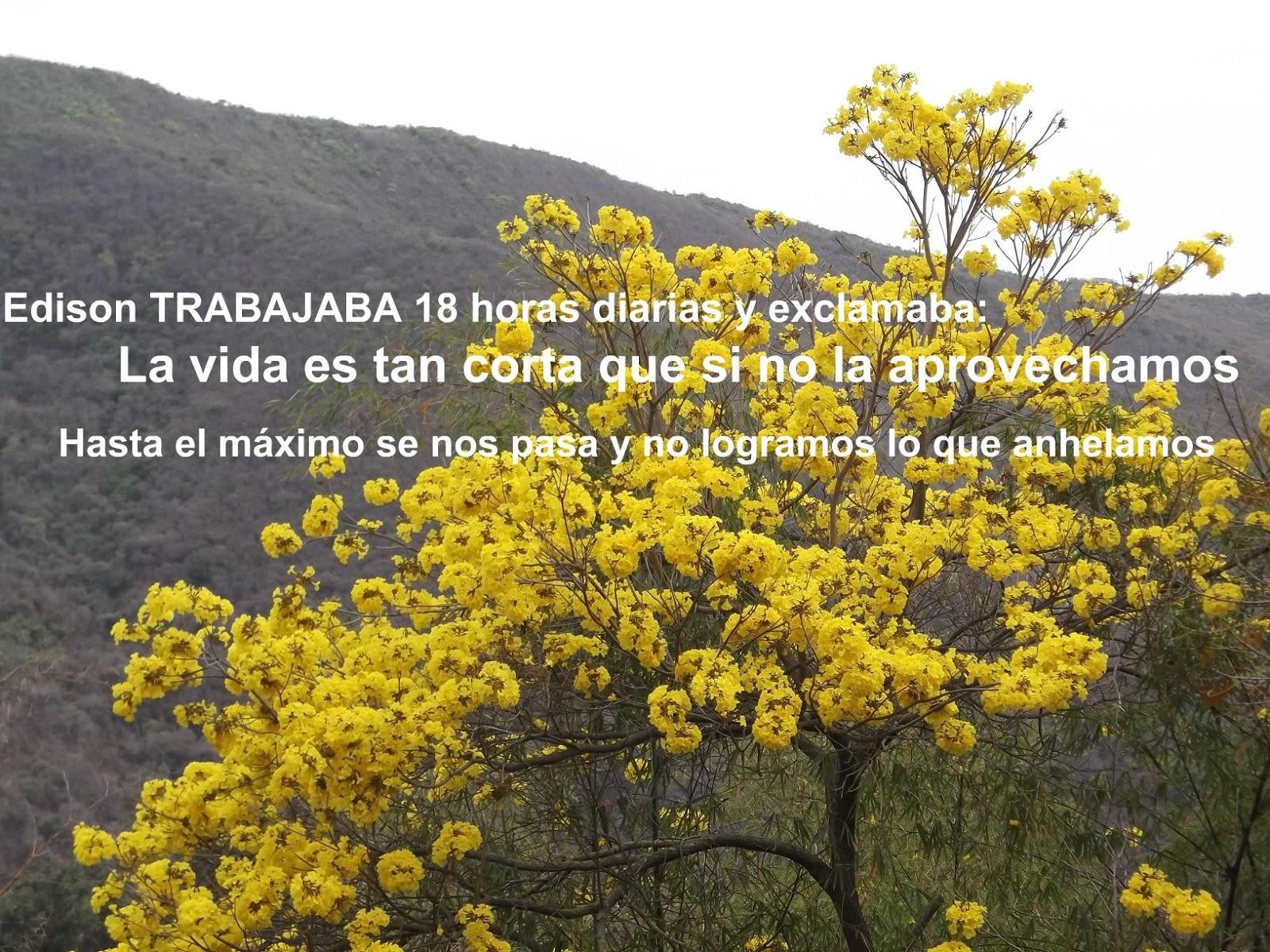 Milagros Fernández 0212.4223247/04123605721