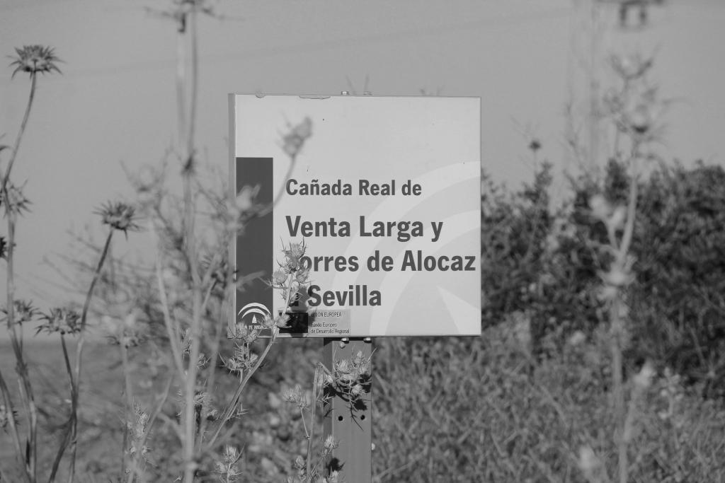 SALINAS DE VALCARGADO (UTRERA, SEVILLA): agosto 2015