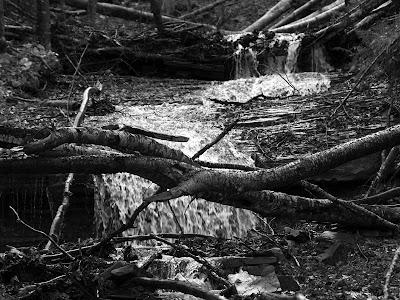 Salita al Giogo di Castagno: torrente in autunno