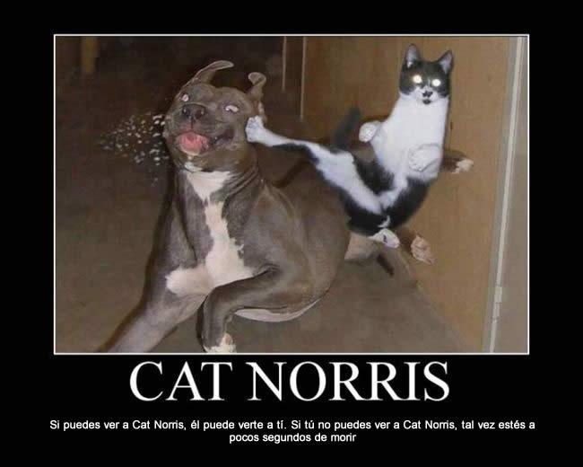 Catnorris