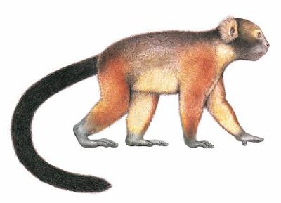 genero extinto Hadropithecus