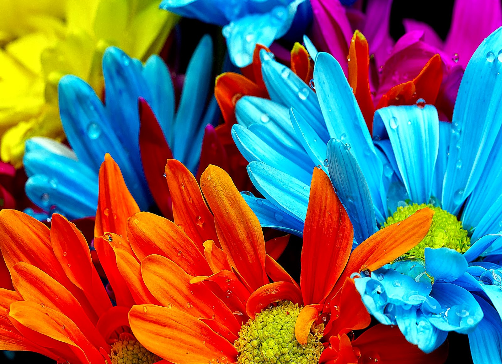 Pictures Of Colorful Flowers | Free Coloring Pictures