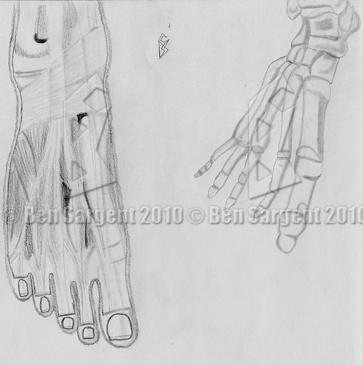 Ben Sargent\'s Art and Story Page: Hands, Feet, and the Human Face ...