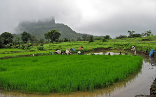 Nestled in the hills of the Sahyadri, at village Telbaila, 32 kms from Lonavala, away from maddening crowds of the city and its stress lies Shakti Yogashram, a serene 30 acres of bamboo forest land, beautiful waterfall, green pastures and virgin treks.