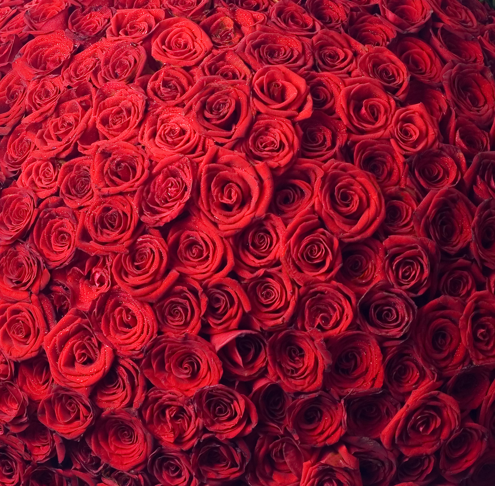 2013 valentine card ecards 2013 bunch of roses