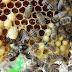 Cientistas fazem alerta mundial: ''Modificação genética poderá acabar com várias espécies no planeta''
