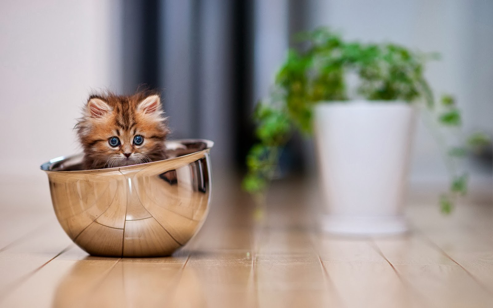 Kitten In The Pot