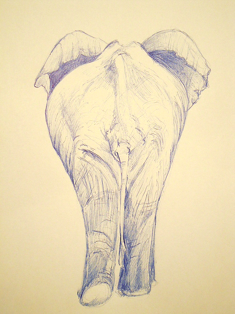 Forest Elephant Drawing Species Savanna Elephants