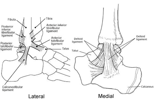 The Doctor's Office: Ankle Injuries | Gi Stink and You!