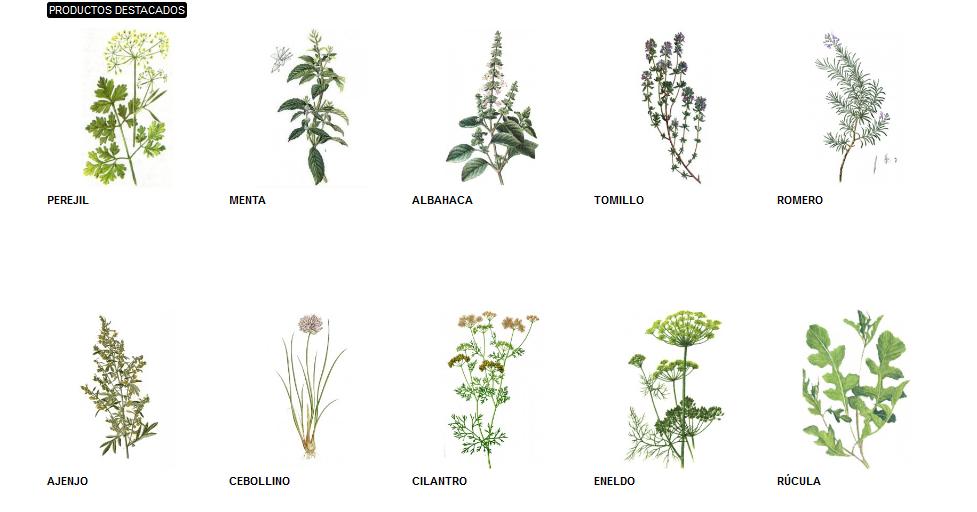 Especias y hierbas arom ticas en casa casas ideas for Tipos de hierbas medicinales