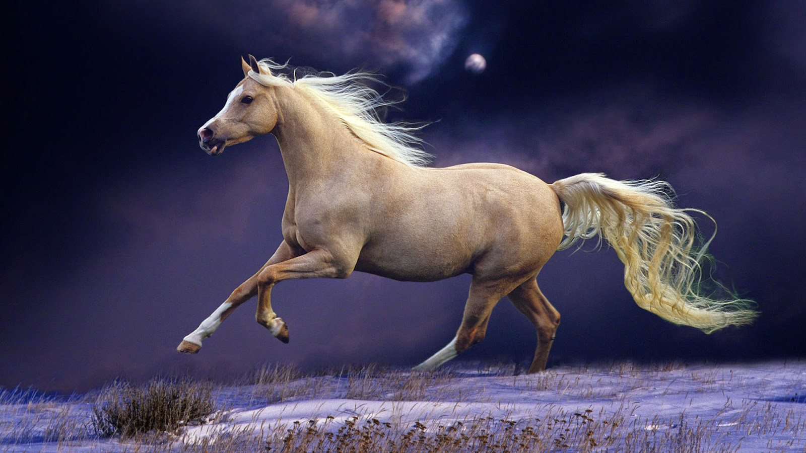 Best Horse Wallpapers  Free Download