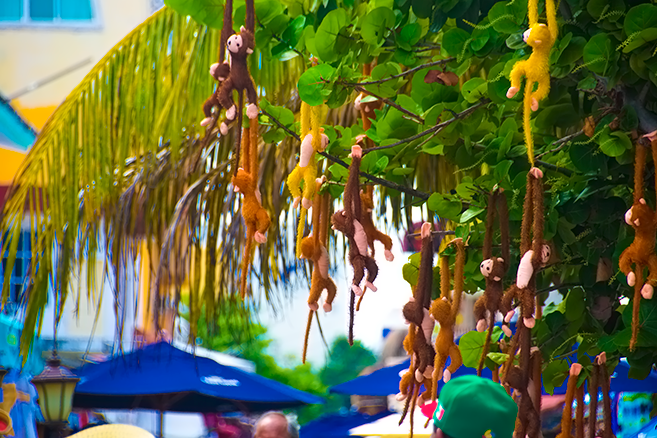 Isla Mujeres x Island Hopping x Night Market