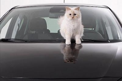 kucing terkaya