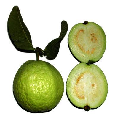 Guava philippines