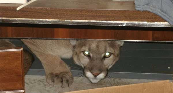 Nothing To Do With Arbroath Family Find Mountain Lion In