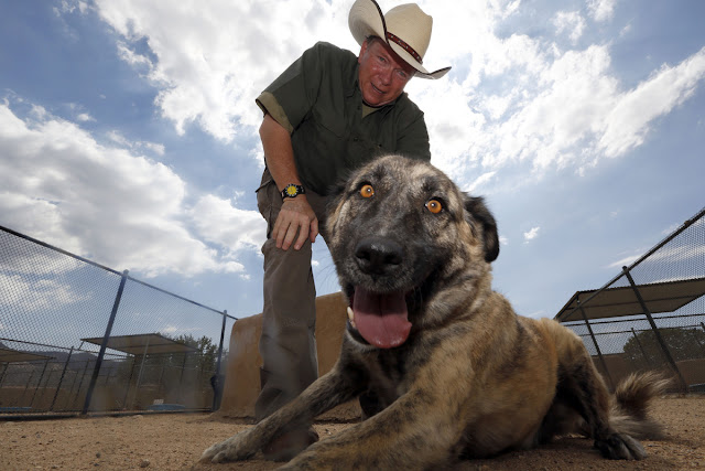Actor starts animal sanctuary and houses 1500 discarded pets (Photos)