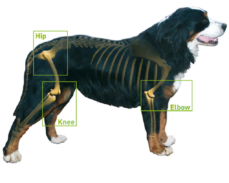 arthritis in dogs and symptoms