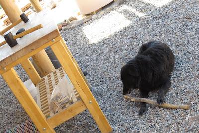 Bella the dog supervises