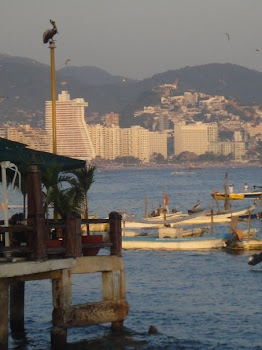 Acapulco Bay with Pelican