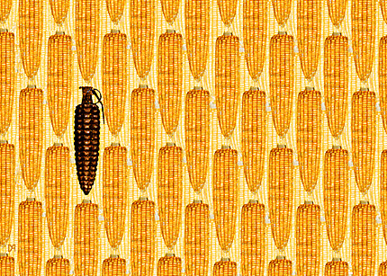 Millions Against Monsanto: The Food Fight of Our Lives