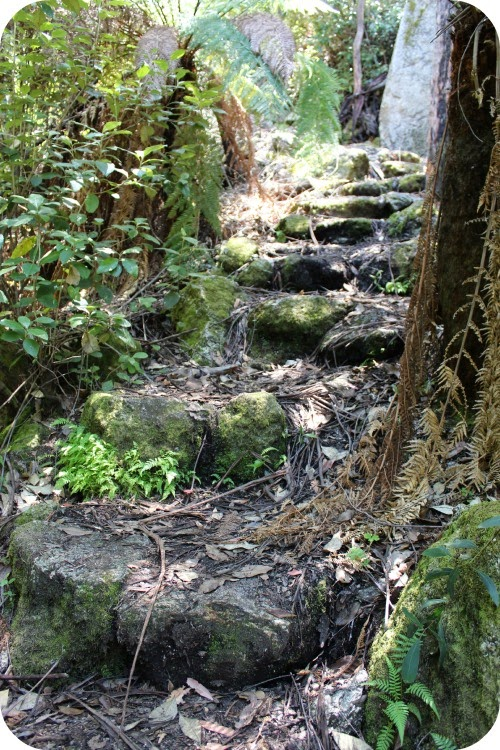 looking back up a flight of natural stone stairs all covered with moss and rain forest type leaf litter