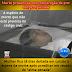 Mulher fica 18 dias deitada em caixão à espera da morte