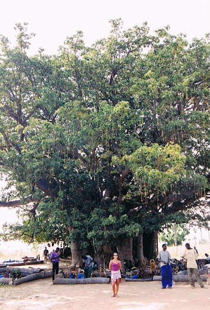 Gran Baobab (Senegal 2003)