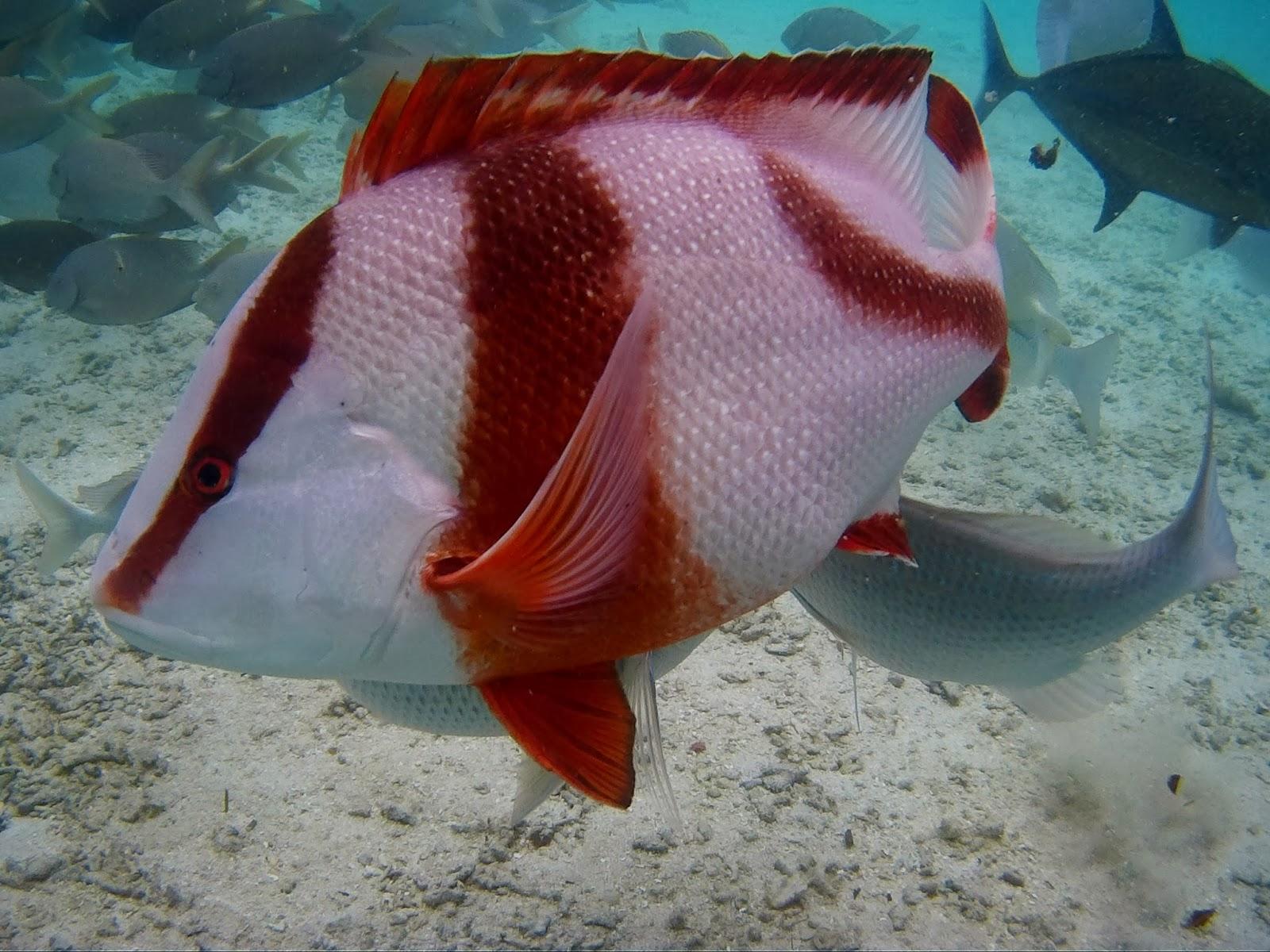 H E L L O ♥ K I M M Y : Juag Lagoon Marine Sanctuary Matnog, Sorsogon