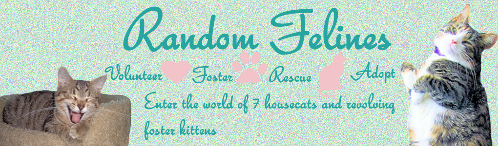 Random Felines