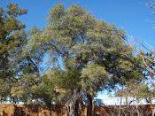 Tree Service<br>Austin, TX