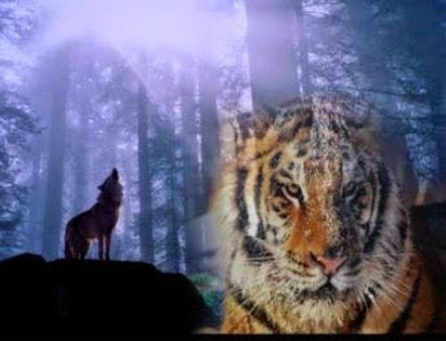 Kisah Harimau dan Serigala