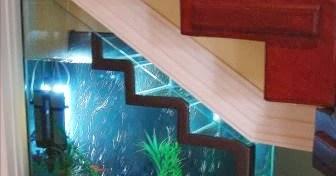 Dise o de interiores peru decorar interiores con peceras - Pecera de pared ...