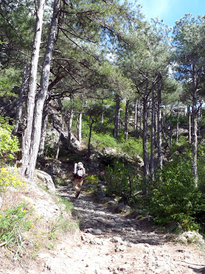 サン・ギエムの森 forêt domaniale de la commune de Saint-Guilhem-le-Désert