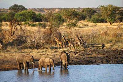 Ngorongoro Wild life Conservative Area UNESCO Heritage Tanzania Africa