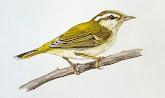 Wild Bird Club Malaysia Facebook