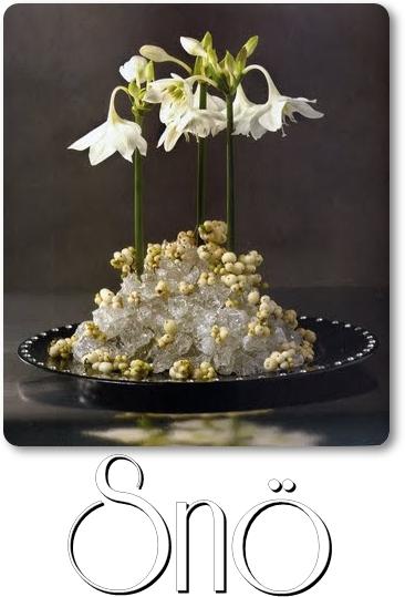 blommor i snö, amazonlilja, amazon lily