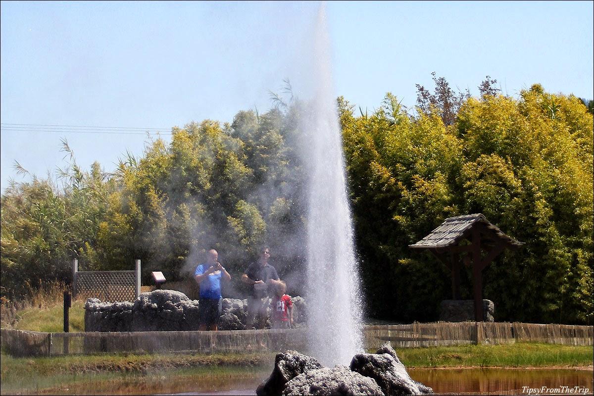 Old faithful geyser of California, Calistoga, Napa County, CA