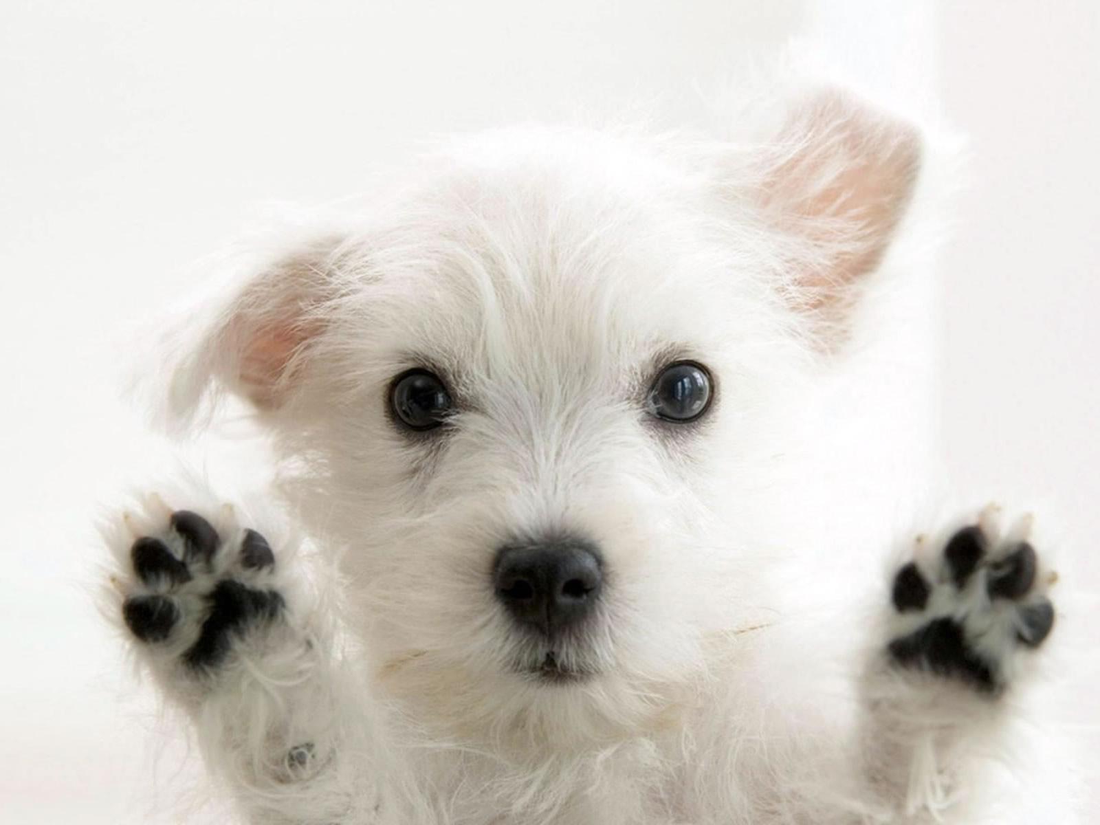 Funny Animals Zone: Cute White Dogs