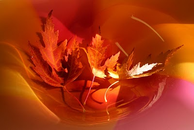 Autumn Art5