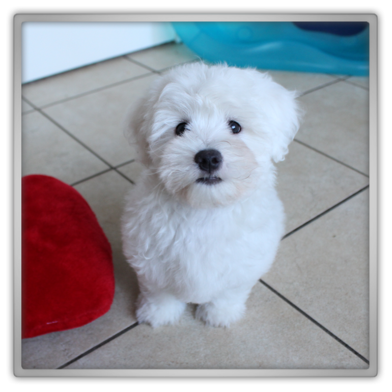 jofee jonathan saccone joly maltese dog puppy bath time rubber duck 4 months cute adorable training marjolein kucmer playing hyper