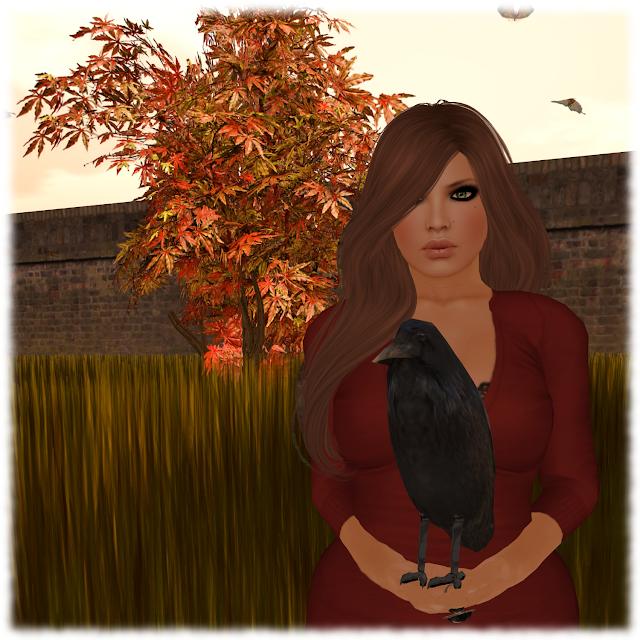 BirdWatching Silence